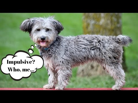 tips-for-developing-your-dog's-impulse-control