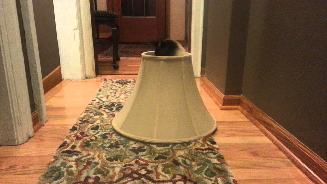 Cat in a lampshade - YouTube