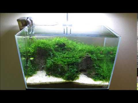 ADA Mini L Dry Start Moss Tank