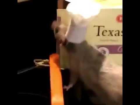 Ratatouille Irl Youtube
