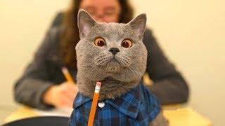 Безумно смешные животные нарезка | веселые животные 2019 | приколы коты и собаки. Greenli