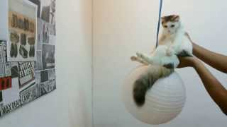 Wrecking Ball Parody by Bella the Cat , Miley Cyrus