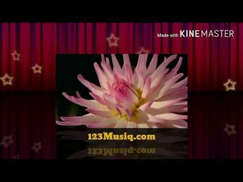 123Musiqcom@gmailcom