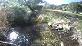 big truite  arc-en-ciel en ruisseau alpin