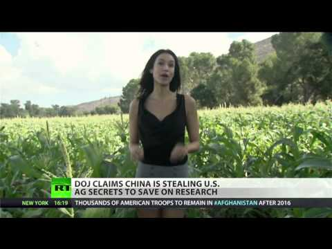 Seeds of war: China, US wage silent battle over GMO corn, grains