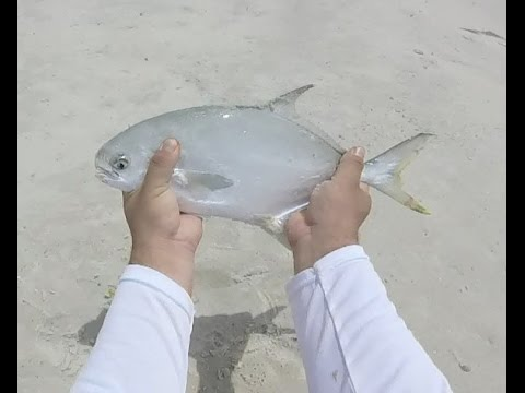 Surf Fishing In Panama City, FL - POMPANO, WHITING, BLUEFISH, AND SHARK