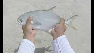 surf fishing in panama city fl pompano whiting bluefish and shark