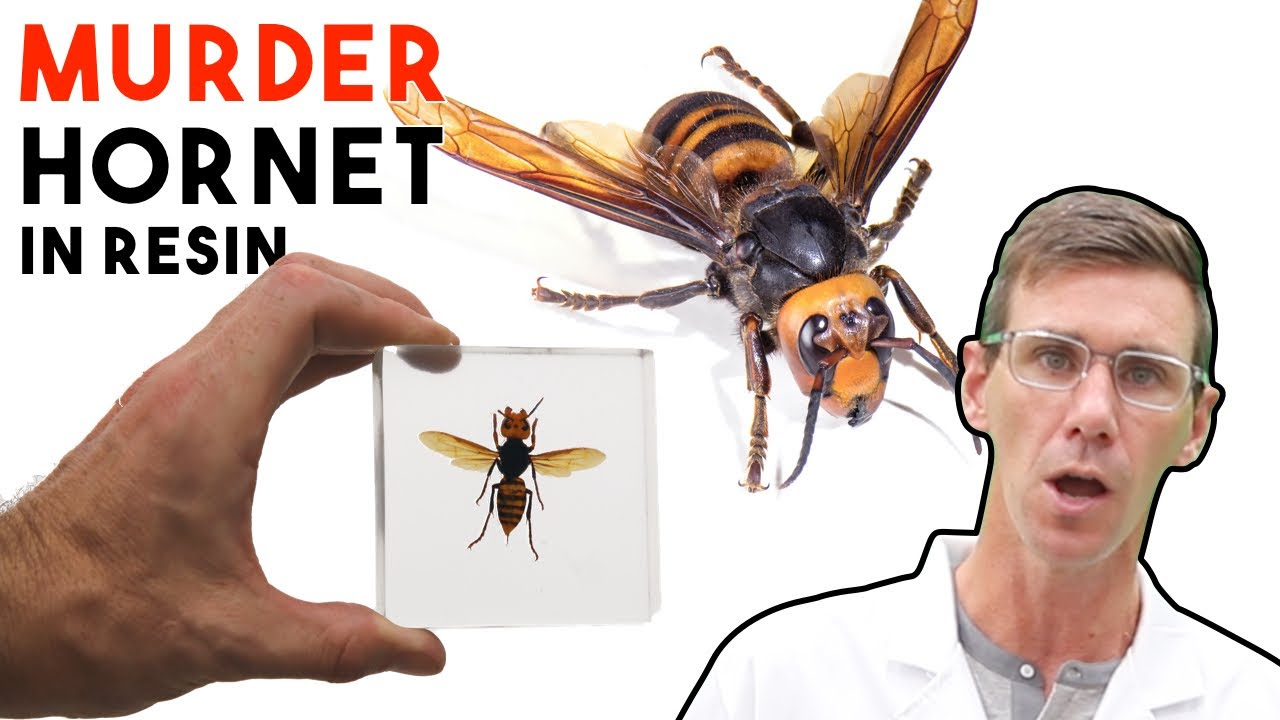 Murder Hornet Insect Resin Casting | How To