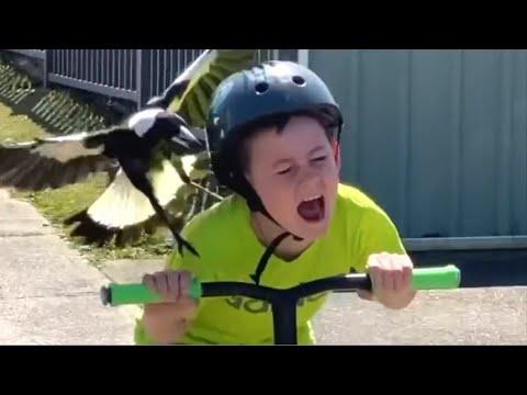 Psycho Bird Attacks Boy On Scooter