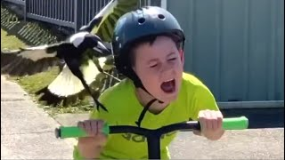 Psycho Bird Attacks Boy On Scooter