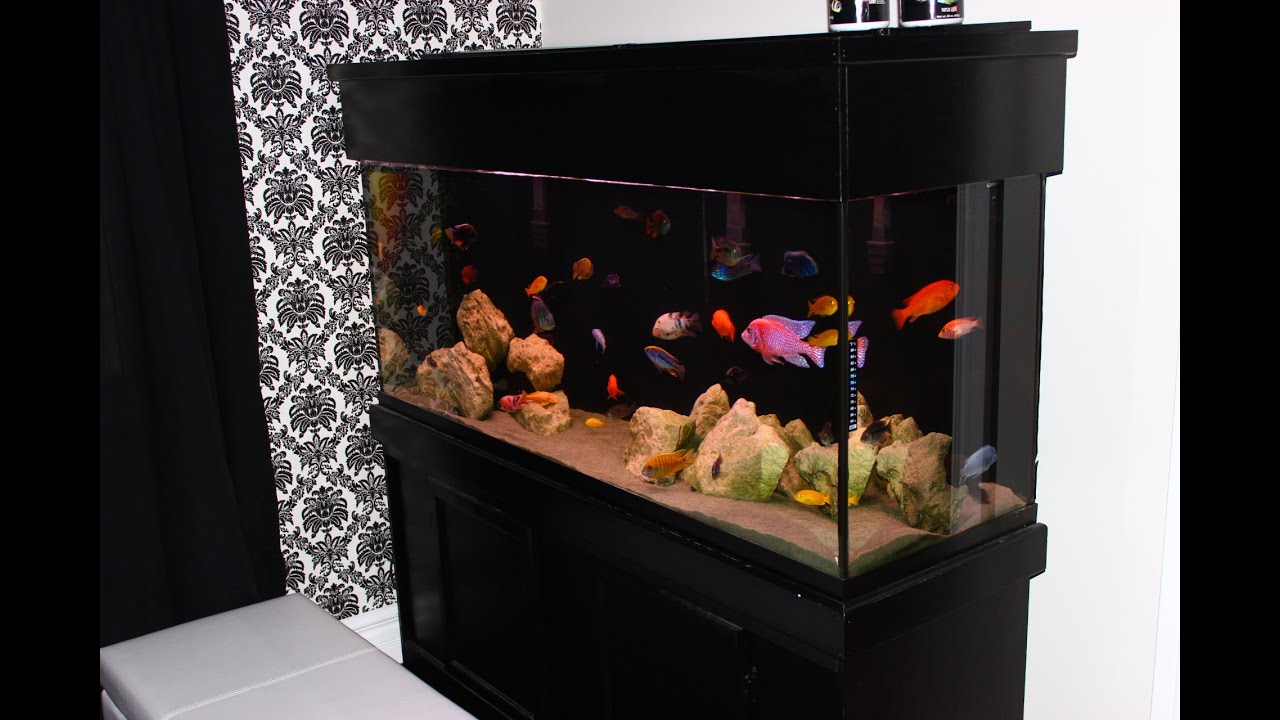 Community fish tank 120 gallon fresh water tropical for Community fish tank