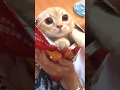 FUNNIEST Cat - CUTE Cat - TRY NOT TO LAUGH