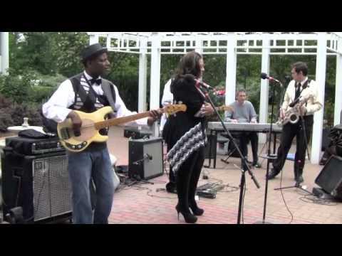 VINTAGE MUSICMAN STINGRAY BASS  DEMO///JLL Band Armour House   Medium