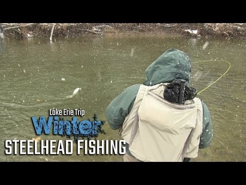 Lake Erie Trib Winter Steelhead Fishing