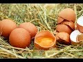 How to Use Egg White to Treat Acne 22 Methods