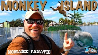 monkey-island-king-kong-manatees-up-close-swampy-boat-ride
