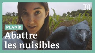 Faut-il abattre les animaux « nuisibles » ? #PlanB