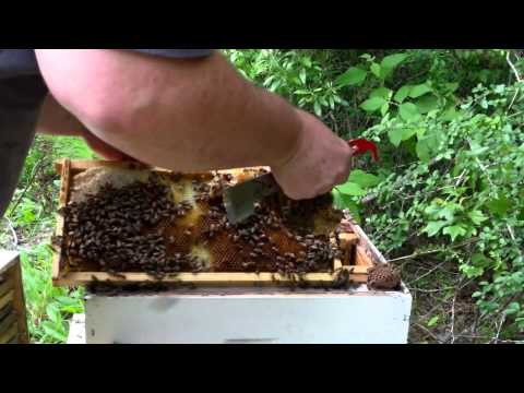 Punishments and Rewards of beekeeping