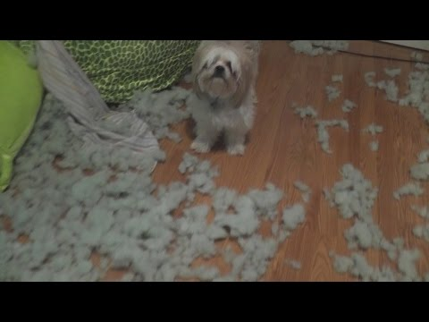 Cute Puppies Rip Apart Giant Stuffed Animal Youtube