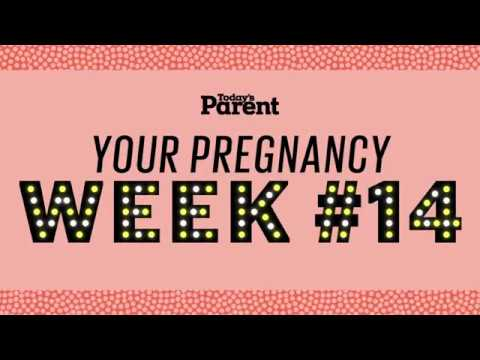 Your pregnancy: 14 weeks