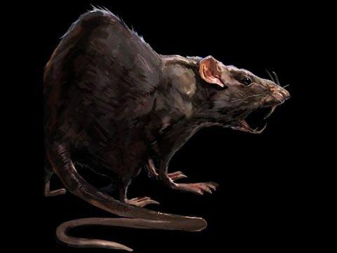 Крысинг #11 ферма.Night Rat.Night Vision.SlowMotion - YouTube