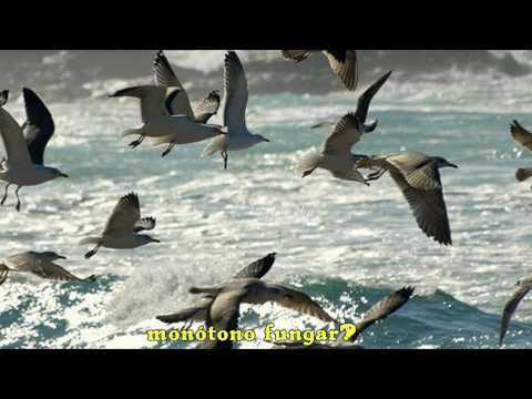 Himno de Galicia (Subtitulado)