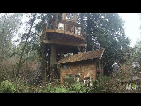 Time Lapse: Record High Recording Studio | Treehouse Masters