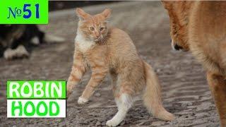 ПРИКОЛЫ 2017 с животными. Смешные Коты, Собаки, Попугаи // Funny Dogs Cats Compilation. Март №51