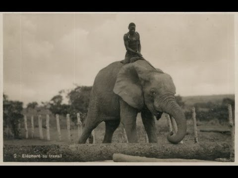 EXCLUSIVE: photos of colonial Africa show Elephant Riders in the Congo