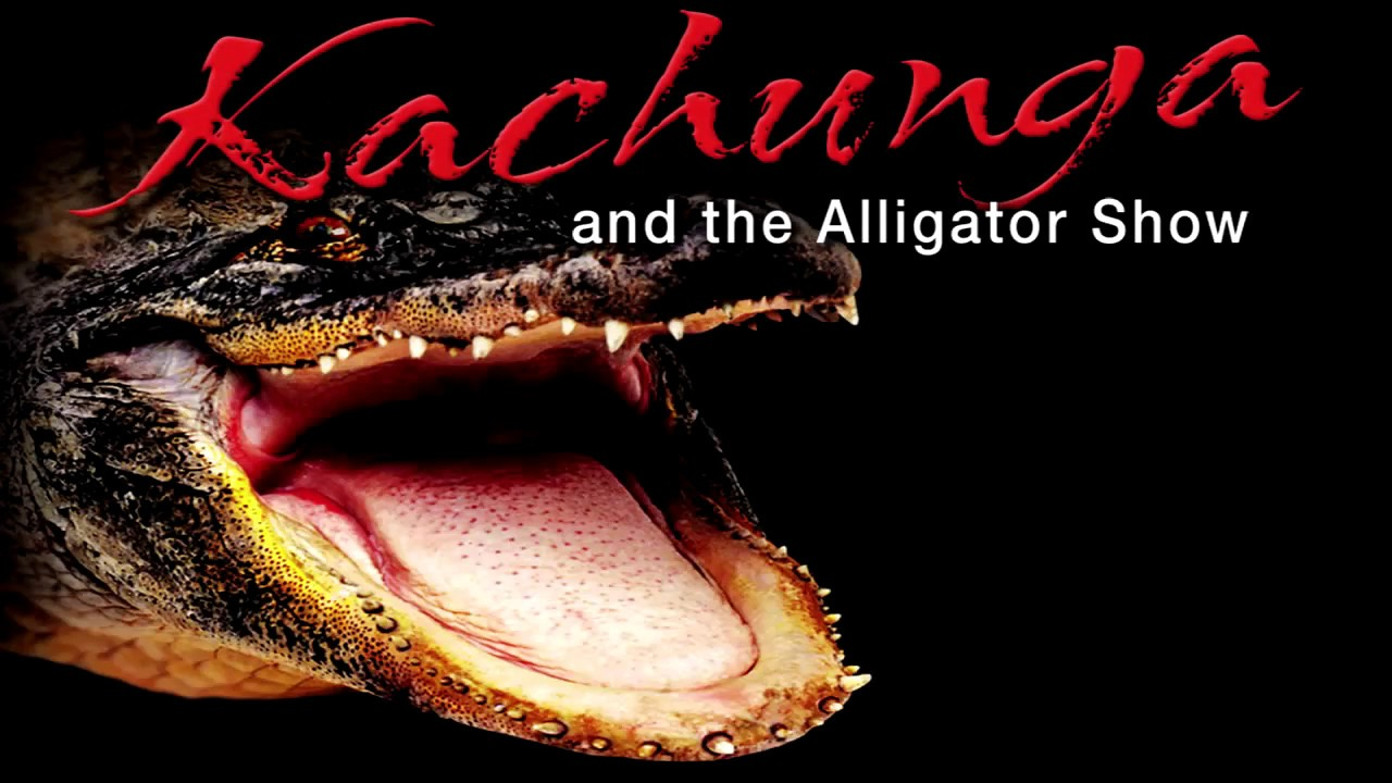 Kachunga Alligator Shows