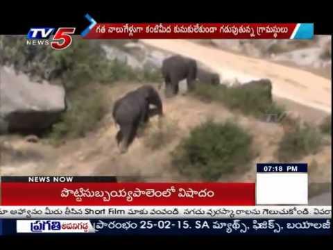 Man Vs Elephant | Elephant Attacks In Uttarandhra : TV5 News