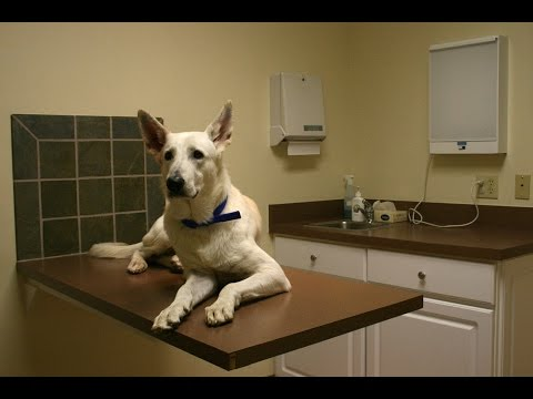 What Food Will Firm Up My Dog's Stool And Prevent His Anal Glands From Becoming Full?