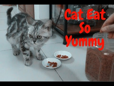 Funny Cat Eat Foods Cat So Yummy | Funny Cat Vines 2017 | Meo Cover Home
