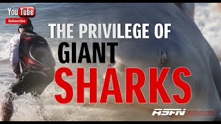 The Privilege of GIANT SHARKS @ASFN Fishing #fishing