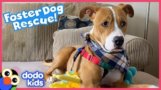 Dog Was Afraid To Go Down Stairs Until He Met Someone Special | Best Animal Friends | Dodo Kids
