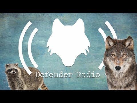Defender Radio: The Podcast for Wildlife Advocates & Animal Lovers