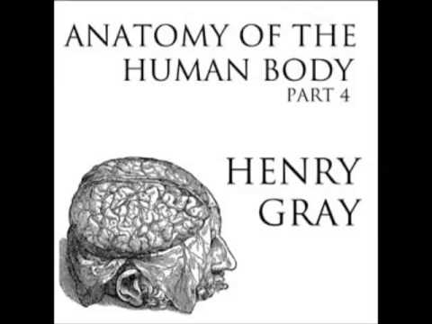 Anatomy of the Human Body (FULL Audiobook) - part (24 of 39)