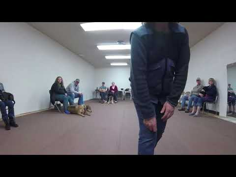 Prodogz Dog Training Medford Oregon, Rogue Valley Oregon and all of Southern Oregon