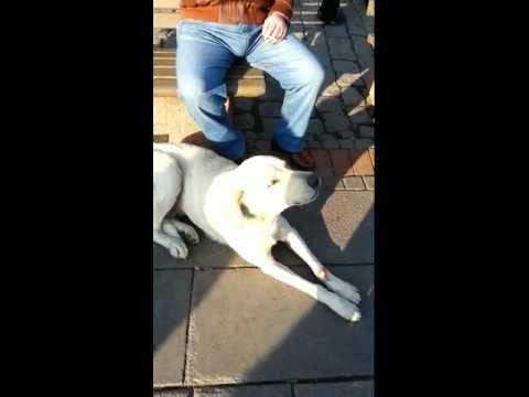 Dog and prayer Azan Must See !