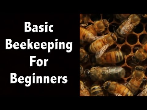 Beekeeping For Beginners and Beekeeping Basics