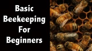 Beekeeping For Beginners and Beekeeping Basics - Off Grid Living