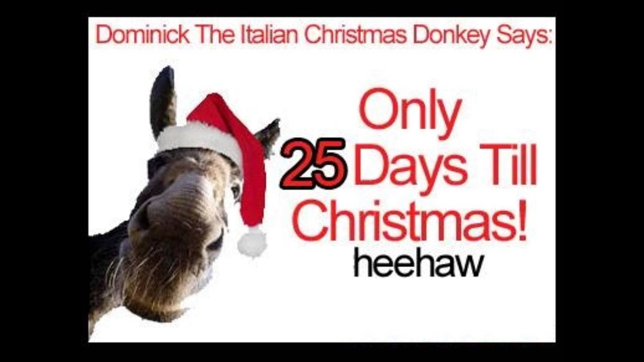 Dominick the Italian Christmas Donkey - YouTube