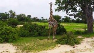 Tanzania/Mikumi National Park Safari