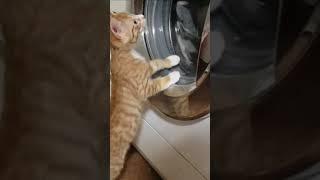세탁기가 신기한 아기 …