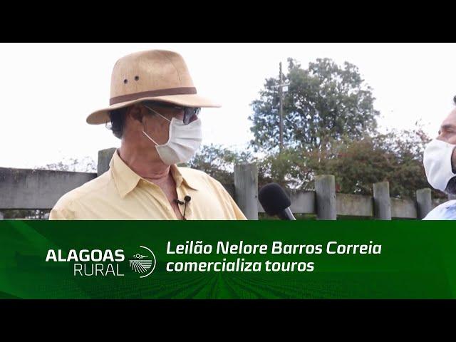 Leilão Nelore Barros Correia comercializa touros prontos para atender o mercado