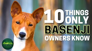10 Things Only Basenji Dog Owners Understand