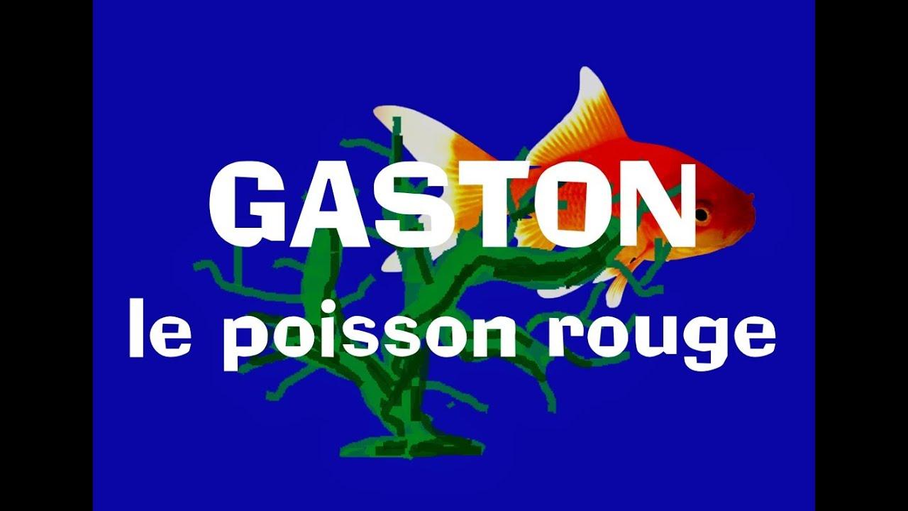 Gaston le poisson rouge chanson pour enfants youtube for Petit poisson rouge