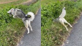 PROOF Dogs Are The Most Dramatic Animals #2