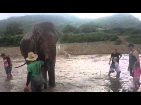 Washing the elephant
