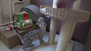 Котенок изучает свой новый дом. Первое купание котенка. 猫